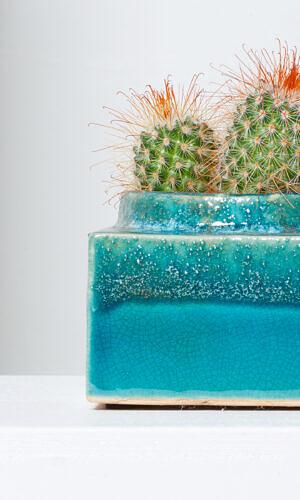 "Kaktusas su vazonu ""Smaragdas"""