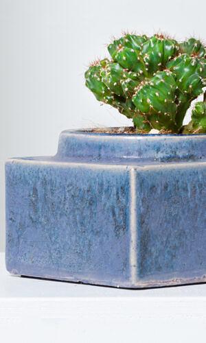"Kaktusas su vazonu ""Jūroje"""