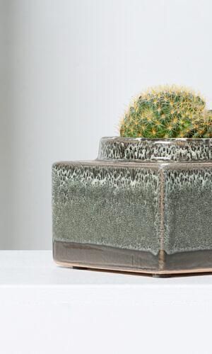 """Kaktusas su vazonu """"Liūtis"""""""