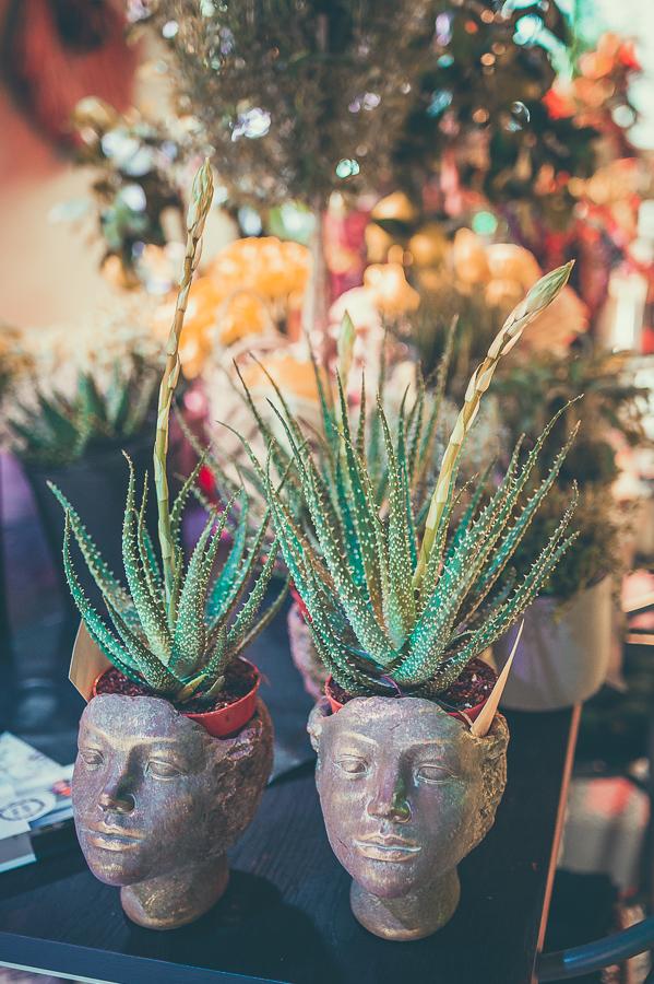 vazonas, vazonas galva, vazonelis, augalas, vazonas augalui, kambarinis augalas, keramikinis vazonas