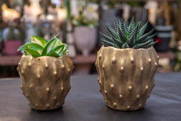 vazonas, vazonelis, keramika, auksinis vazonelis, augalai