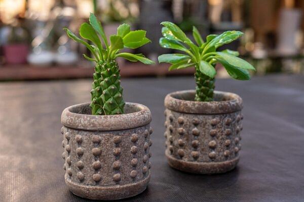 augalai, vazonas, vazonėlis, keramika, dovana