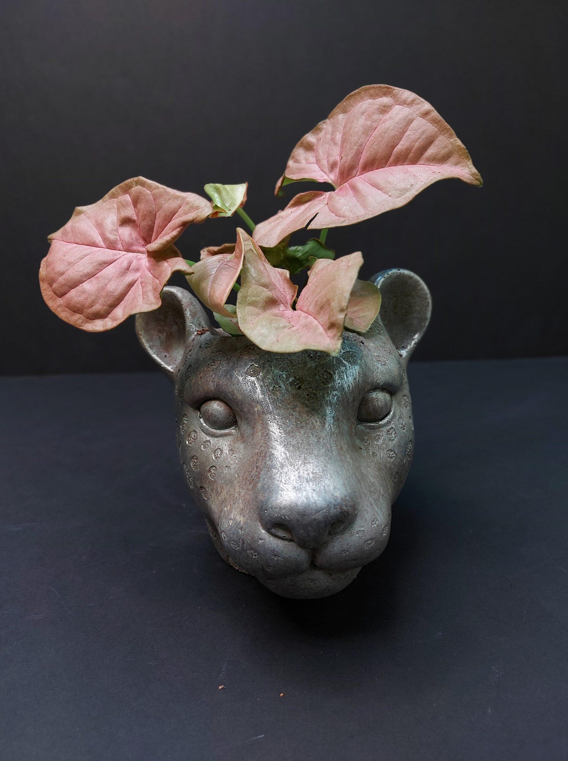 singonis, Syngonium pinkmarble, lapinis augalas, reti augalai, kambariniai augalai, augalai vilniuje